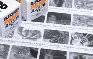 B&W negatives from digital photos